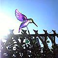 風瀬紫鳥.jpg